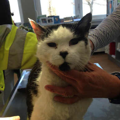 Orientierungslose ältere Katze in Neuhausen